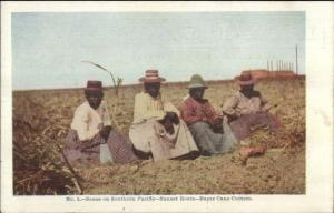 Black Americana Scene on Southern Pacific Sugar Cane Cutters c1905 PC jrf