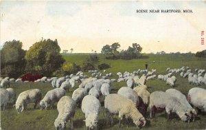 Hartford Michigan 1911 Postcard Scene With Sheep