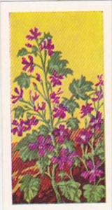 Glengettie Trade Card Wild Flowers No 10 Common Mallow