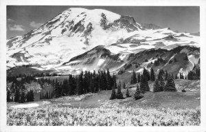 RPPC Flower Fields, Paradise Valley, Rainier Natl Park, WA 1948 Vintage Postcard