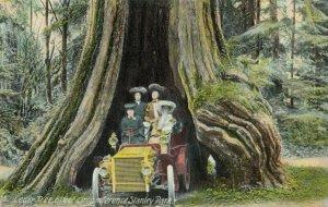 VANCOUVER , B.C. , 1900-10s ; Car in Cedar Tree , Stanley Park