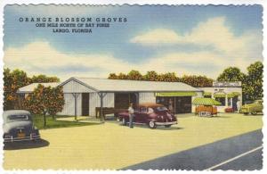 Largo FL near Bay Pines Orange Blossom Groves Shipping Citrus Old Cars Postcard