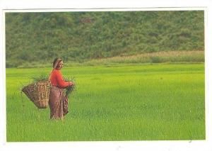 Cutting Grass , Brahmin Woman NEPAL , 70-80s