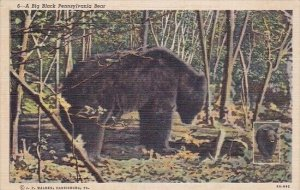 A Big Black Pennsylvania Bear Harrisburg Pennsylvania