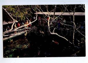 206411 BERMUDA Devills Hole Smiths Parish Old photo postcard