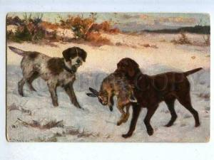 185930 Hunt rabbits w/ dogs POINTER winter vintage postcard
