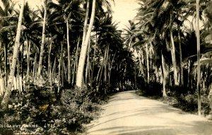 Philippines - Cocoanut Palms. Photo: Eduardo DeLeon *RPPC