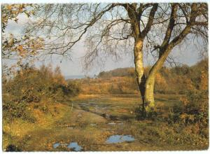 UK, Autumn in Ashdown Forest, 1982 used Postcard