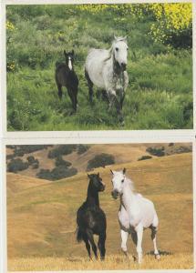 Arabian Horses Postcards Lot of 2 Beautiful