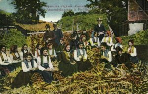bulgaria, PIRDOP Пирдо, Group of Farmers Traditional Costumes (1910s) Postcard