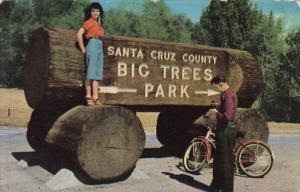 California San Cruz Entrance To Big Trees Park