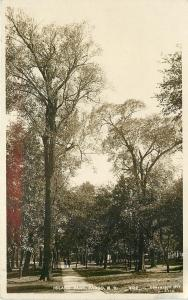 Fargo ND~Tall Tree @ Island Park Pathway and Trees~c1907 Woolson Postcard