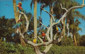 Florida Tampa Busch Gardens The Parrot Tree