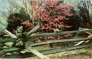 Squirrels on a Fence Trees Never Saw A Wild Thing Animal Postcard