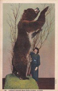Largest Kodiak Bear ever caught , Alaska, 30-40s