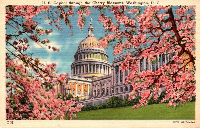 Washington D C United States Capitol Building Through The Cherry Blossoms 1956