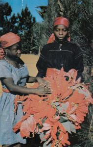 PORT AU PRINCE, Haiti, 40-60s; Ti-Sor & Ti-Femme fixing poinsettias to be sold