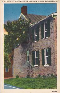 Unusual House and Tree On Braddock Street Winchester Virginia