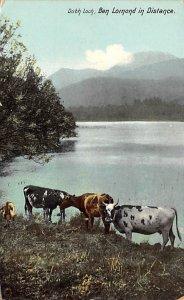 Cow Post Card Dubh Loch, Ben Lomond in Distance Unused