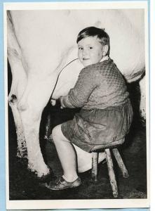 Chubby Boy Milking Cow