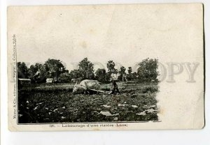 3133061 LAOS Labourage d'une riziere Vintage postcard