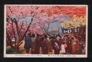 061366 JAPAN five-colours cherry trees at Arakawa Vintage PC#2