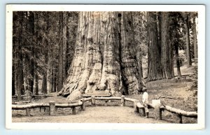 RPPC SEQUOIA NATIONAL PARK, CA ~ General Sherman GIANT TREE  1938  Postcard