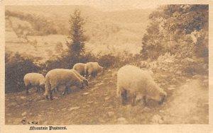 Mountain Pastures Sheep Writing on back