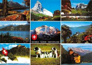 Suisse Multiviews, St. Bernard Dogs, MAtterhorn, Grindelwald, Weggis, Ronco