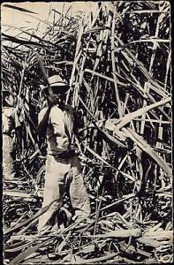 Reunion, Native Man Cutting Sugar Cane (1960s) RPPC
