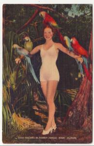 P538 JLs 1930-45 linen pretty lady parrots miami florida