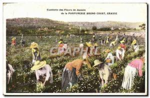 Old Postcard Picking jasmine flowers Parfumerie Bruno Court Grasse
