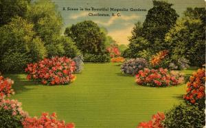SC - Charleston. Magnolia Gardens