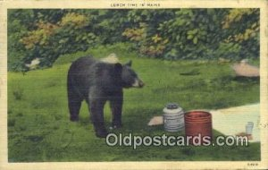 Lunch Time in Maine, Bear 1951
