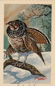 Ruffed Grouse Pennsylvania State Bird