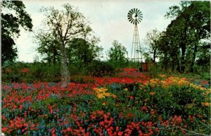 VTG Postcard Texas Hill Country Spring Flowers Old Water Windmill Scenic 1474