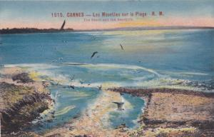 CANNES, Alpes Maritimes, France, The Beach and the Seagulls, 00-10s