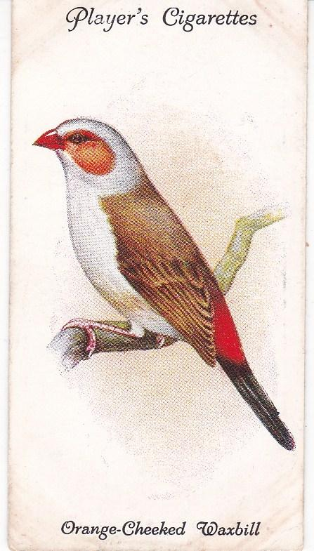 Cigarette Cards Playe Aviary and Cage Birds No 39 Orange-Cheeked Waxbill
