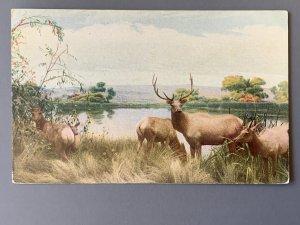 San Joaquin Valley Elk Group Golden Gate Park SF CA Chrome Postcard A1173090051