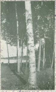 Ludington Michigan~Upper Hamlin Lake~1906 Postcard