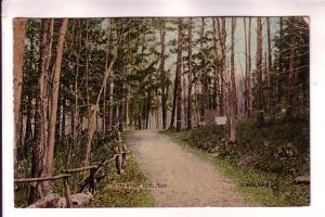 In The Woods, Lynn, Massachusetts, Thomson & Thomson