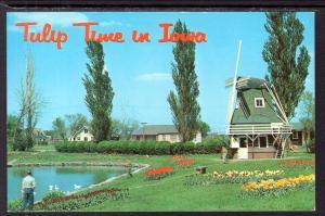 Tulip Time in IA BIN