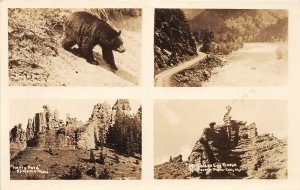 F83/ Cody Wyoming Postcard RPPC c1930s 4View Bear Henry Ford Geology