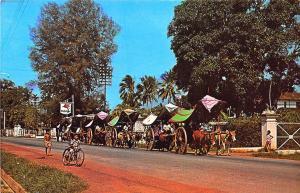 Malacca Malaysia Bullock Carts Singapore M 518 Postcard
