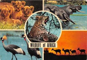 BG20829 wildlife of africa lion elephant deer tanzania