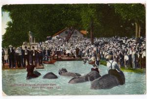 Elephants Bathing, Riverside Park, Sioux City Iowa