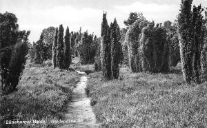Lueneburger Heide Heidepartie Trees