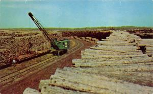 International Falls Minnesota~Pulp Wood Stack~Crane~Paper Mill~1950s Pc