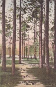 Walk To The Carolina Pinehurst North Carolina Handcolored Albertype