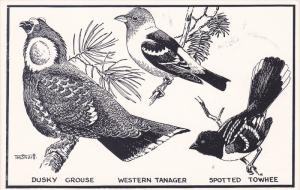 AS: T. M. Shortt, Dusky Grouse, Western Tanager, Spotted Towhee, Toronto, Ont...